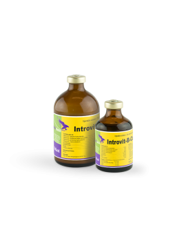 Introvit-B-complex LV 100 ml